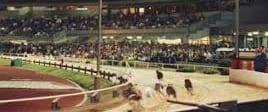 Olympic Park Greyhound Track