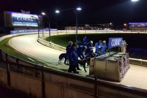 Romford, Hove & Central Park greyhounds return to RPGTV