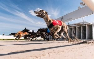Great Britain greyhounds move to unlimited race meeting cards