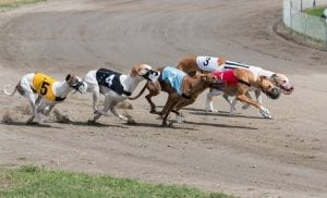 Florida's greyhound supporters make final appeal to overturn greyhound ban