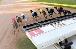 The 13th Greyhound Race May Be Unlucky