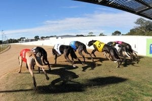 Have we lost the greyhound racing grading plot?