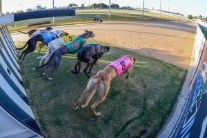 Ballarat greyhounds - very good, good, and ordinary