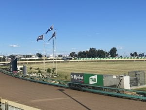 Meadows kick off 2021 Group greyhound racing with G1 Silver Chief
