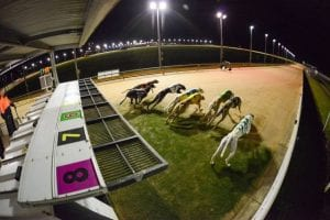 How to handle the next greyhound racing revolution