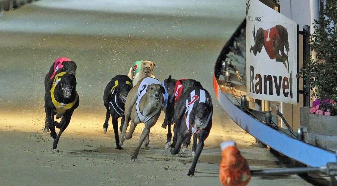 Greyhound Racing Australia
