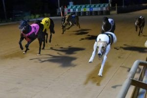 Greyhounds working in the dark - mostly
