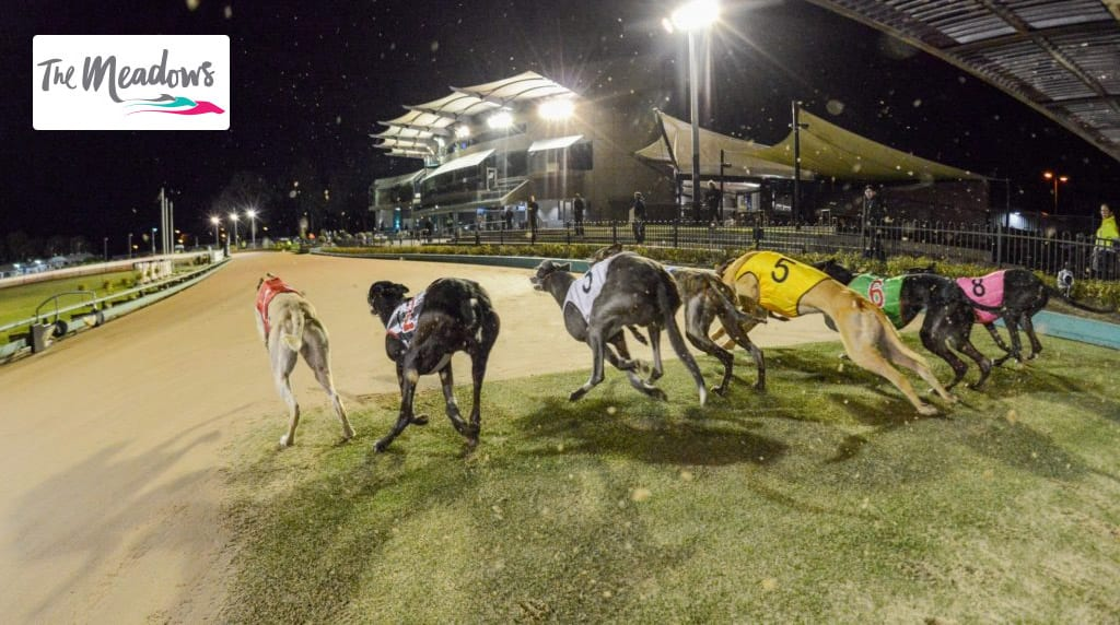 The Meadows Greyhound Track