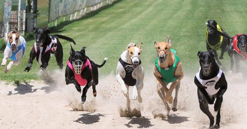 Capalaba Greyhound Racing Club