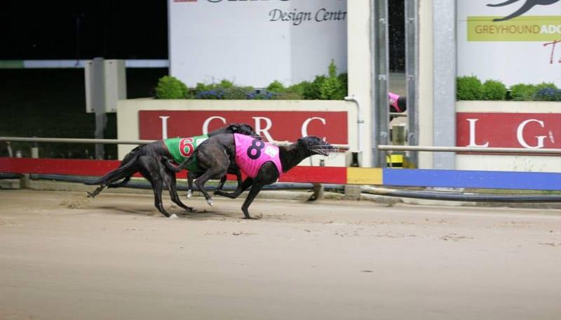 Devonport greyhound track