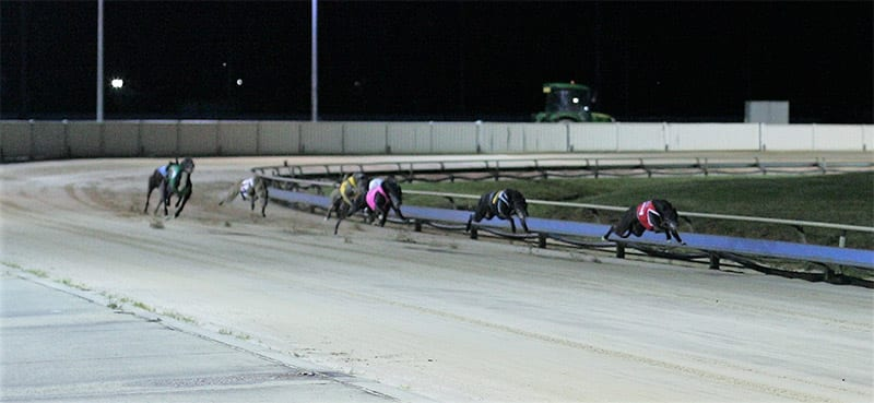 Launceston greyhound track