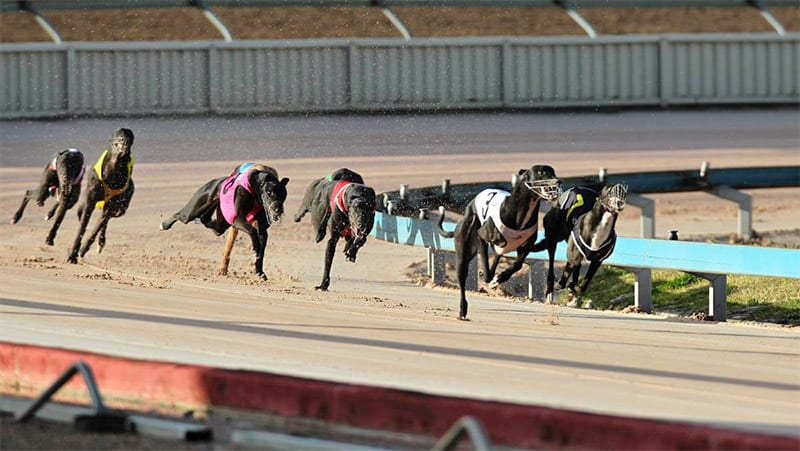Maitland Greyhound Track